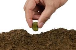 Recomendaciones-para-plantar-desde-semillas