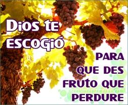 dar-fruto